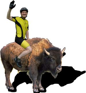 Beat auf Bison